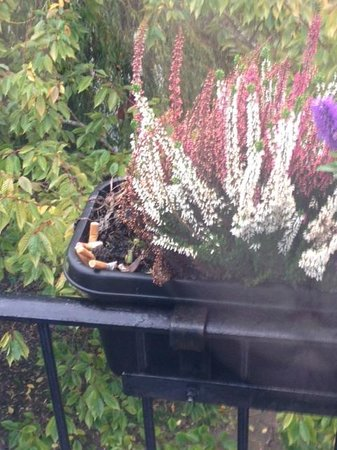 Old Mill Hotel : Ciggarette Butts In Flower Box