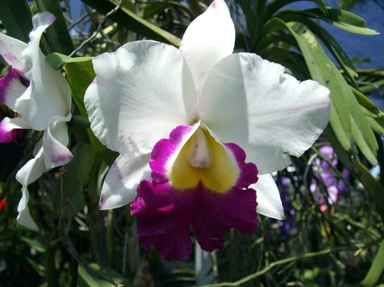 Phuket Orchid Farm : Just a few of the 180 photos I took