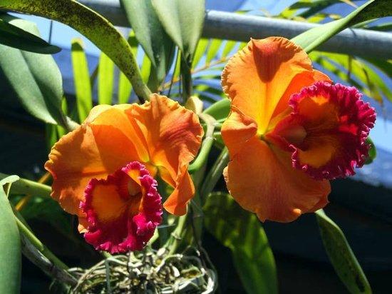 Phuket Orchid Farm: Thai Orchid Farm