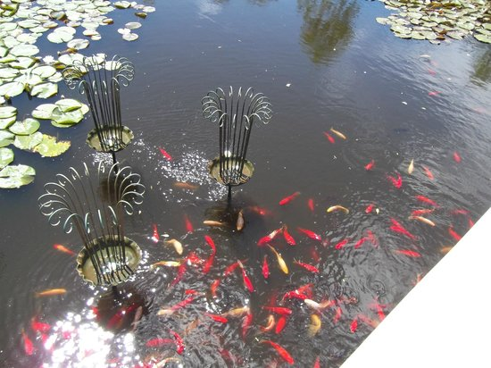 Ngatea Water Gardens : The Children were fascinated with the Fish.
