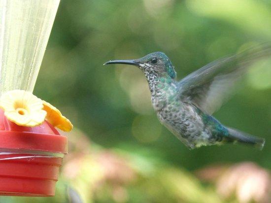 El Descanso: Humingbird