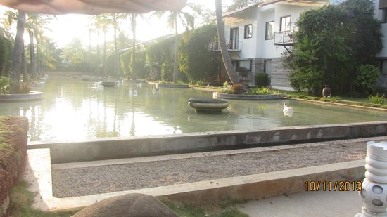 The Windflower Resort & Spa, Mysore: Ducks play here all day