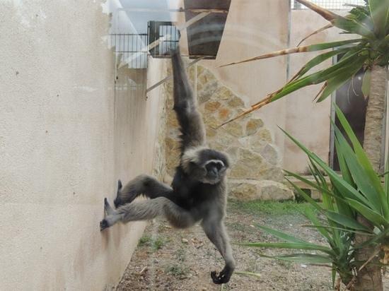 Safari Zoo de Mallorca: Safari Zoo