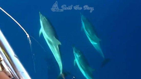 Sail the Day - Skiathos Sailing Trips : Sail The Day_8