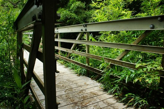 Pipiwai Trail: brige - one of many