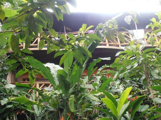 Pousada Naturalia: Vue sur les chambres