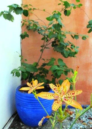 Stay Cool Bungalow: Flores tropicais