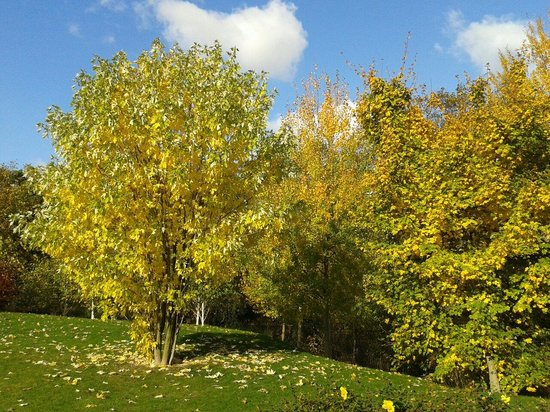 Jardin d'Acclimatation: Parque le jardin d Aclimatation