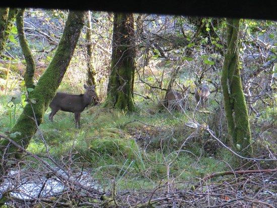 Killarney Jaunting Cars Tours: Deer