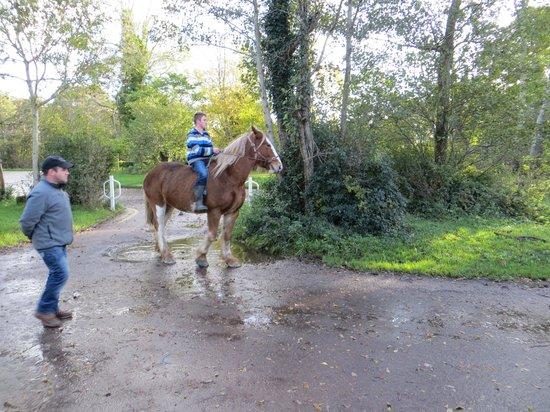 Killarney Jaunting Cars Tours: Switching horses