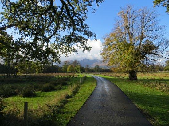 Killarney Jaunting Cars Tours: Gorgeous