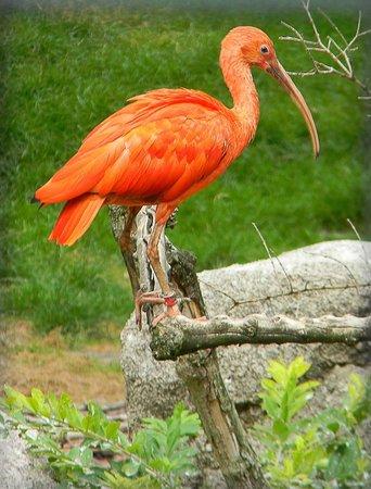 Luisenpark Mannheim : Птицы в Луизен-парке