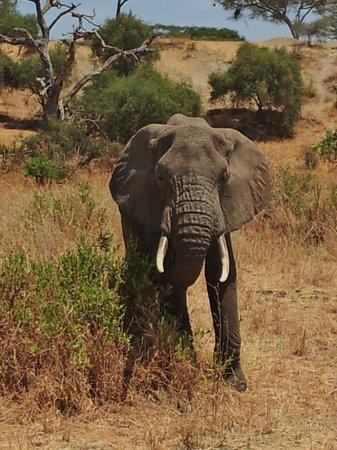 Bush 2 Beach Safaris: Tarangire National Park