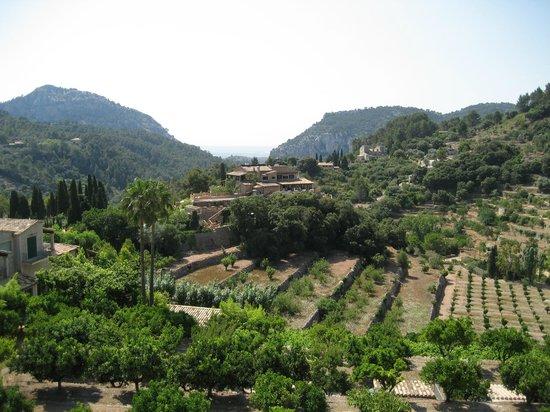 Royal Carthusian Monastery (Real Cartuja) : Вид с балкона