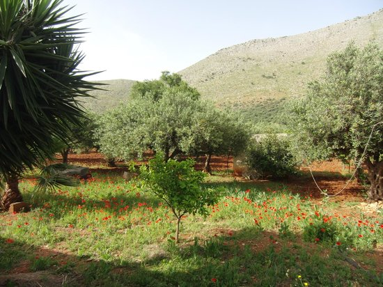 Casa Vacanza Baglio Montoleone: Tranquil and fragrant Sicilian countryside - butterflies, wild poppies, lemon trees and olive gr