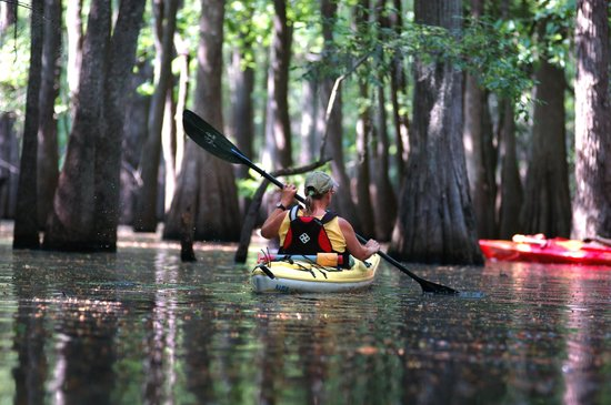 Nature Adventures : Paddle through a Flooded Forest with us