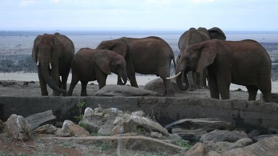 Voi Safari Lodge: elephants at the watering hole