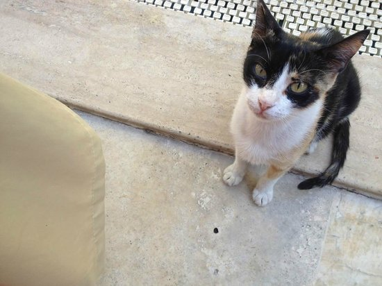 Oscar Boutique Hotel: Кошки возле стола