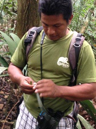 Napo Wildlife Center Ecolodge: Hugo - the best nature guide