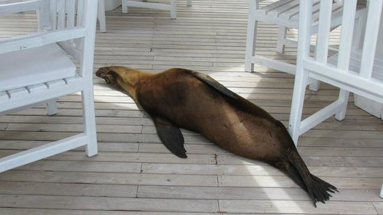 Angermeyer Waterfront Inn: sea lion sleeping on patio