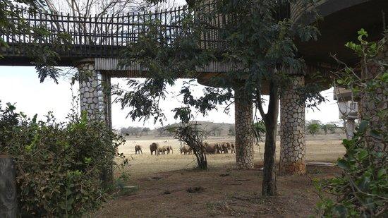 Sarova Salt Lick Game Lodge: View from entrance