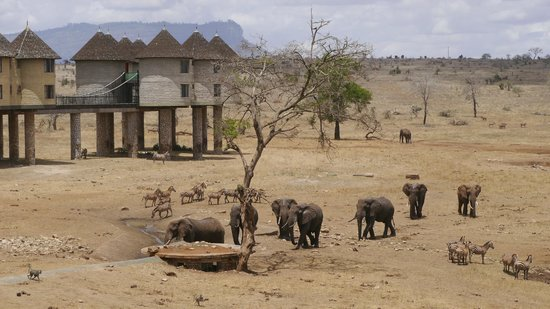 Sarova Salt Lick Game Lodge: the watering hole