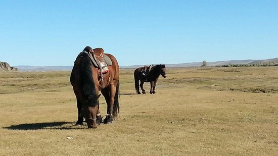 Horse Trails Mongolia - Day Treks : Smart horses never experienced before