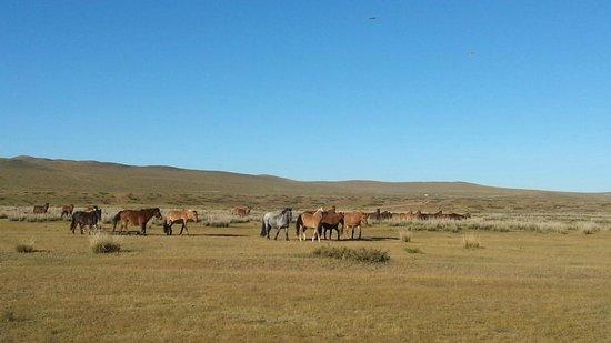 Horse Trails Mongolia - Day Treks : Wild horses