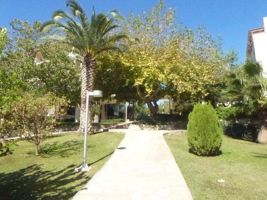 Barut Hemera : garden