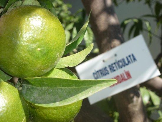 Barut Hemera : mandarines