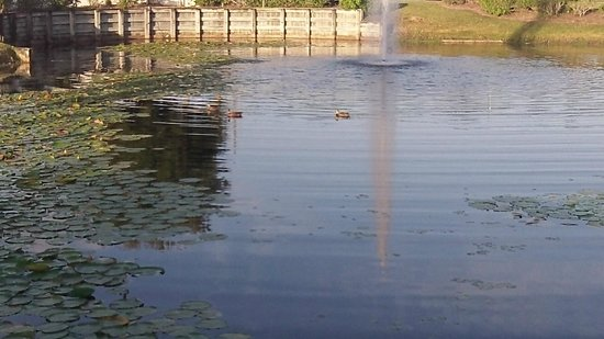 Staybridge Suites Lake Buena Vista: A shot of the pond in front of the hotel.