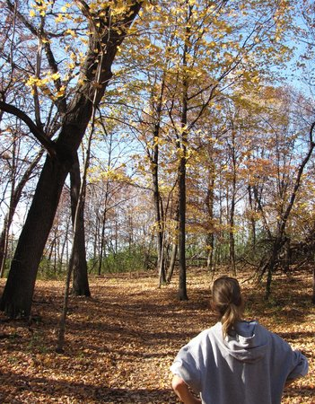 Murphy-Hanrehan Park Reserve: On a trail in the fall
