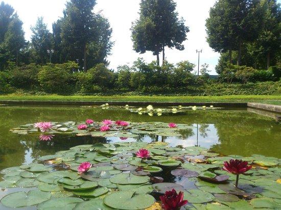 Les avis sur Rose Garden (Rosengarten), BerneRose Garden (Rosengarten)