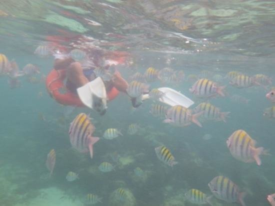 Catamaya Sailing Cruises: fish everywhere!