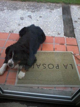 La Posada de Madryn: el perro del hotel