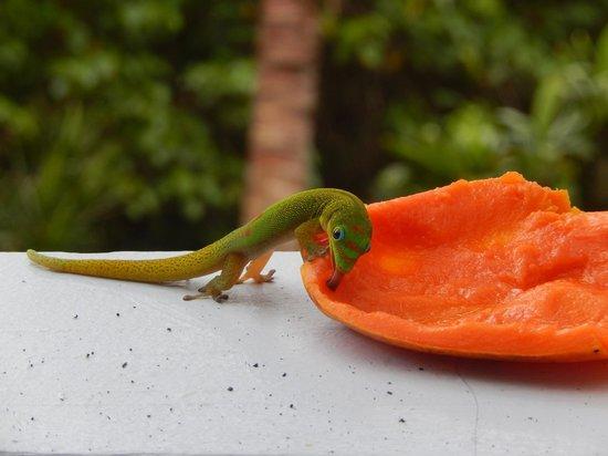 Ma'ukele Lodge: Gecko