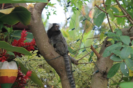 Che Lagarto Hostel Paraty: cute monkey
