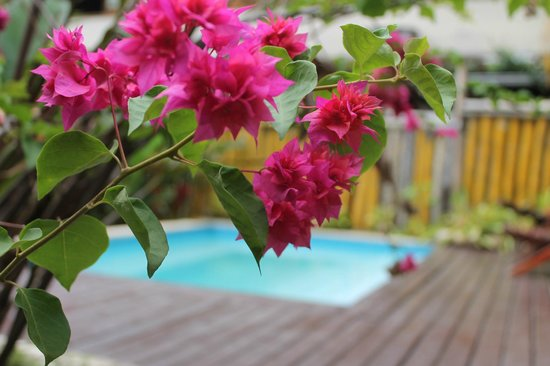 Che Lagarto Hostel Paraty: pool
