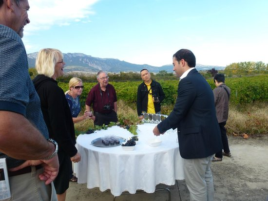 Thabuca Wine Tours: Taste of the grapes, the fresh juice & young wine in the vineyard