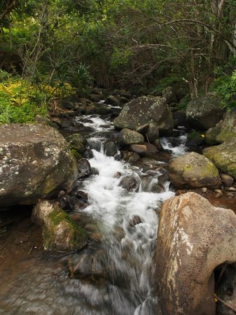 Limahuli Garden and Preserve: Stream from a natural spring