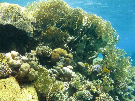 Aquasport : Clear water and great corals