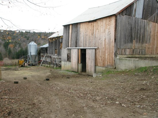 Sugarbush Farm: barns outside the main house