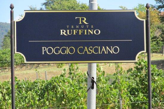 Ruffino - Tenuta di Poggio Casciano: Ruffino Estate