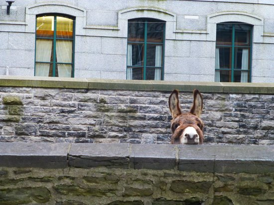 Tours Voir Quebec: The church donkey listening attentively to Neil
