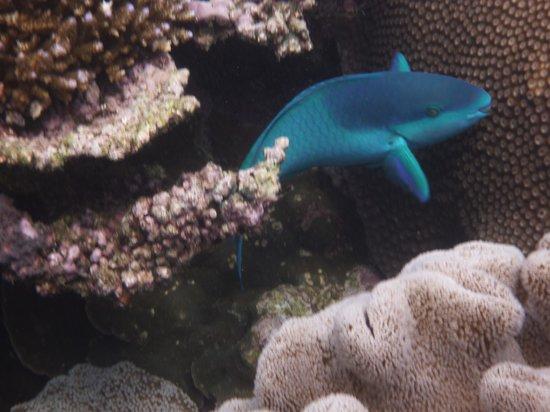 Agincourt Reef : 熱帯魚もたくさんいます