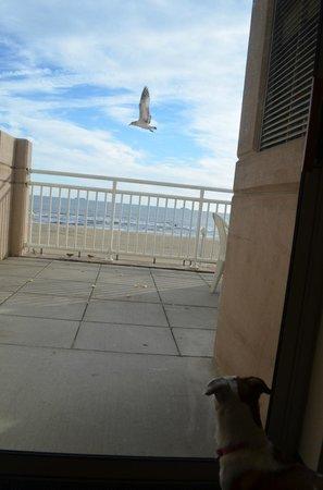 Residence Inn by Marriott Virginia Beach Oceanfront: Feeding the birds