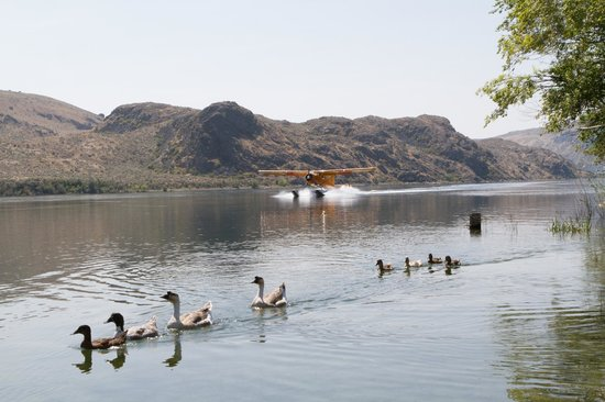 Chelan Seaplanes: Approaching Rio Vista Winery on the Columbia River