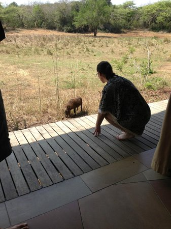 andBeyond Phinda Homestead : UP CLOSE & PERSONAL