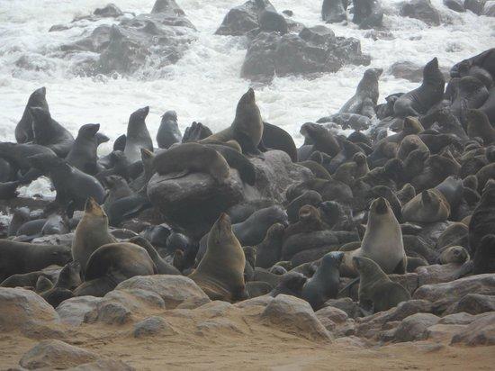NWR Terrace Bay Resort: Seal colony at Cape Cross