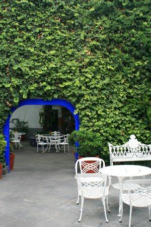 Hotel Casa Gonzalez : Garden
